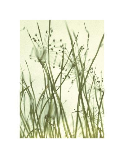 Watery Grasses 1-Jenny Kraft-Art Print