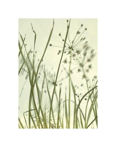 Watery Grasses 2-Jenny Kraft-Art Print