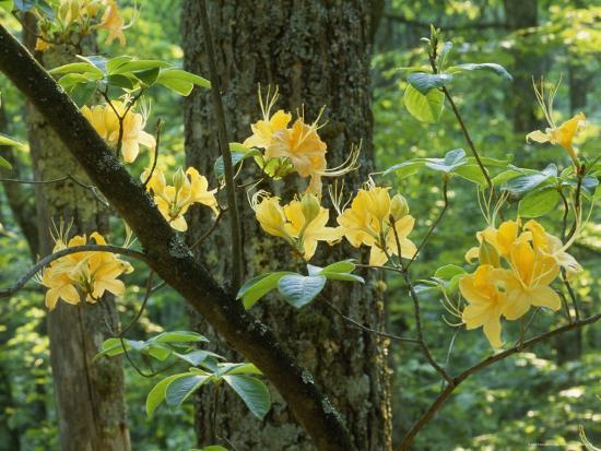 Watoga State Park, West Virginia-James P^ Blair-Photographic Print