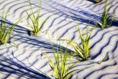 Waves of Sand II-Alan Hausenflock-Photographic Print