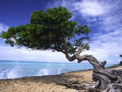Waves Splash onto a Beach with a Gnarly Tree-Michael Melford-Photographic Print