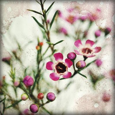 Wax Flower I-James Guilliam-Giclee Print