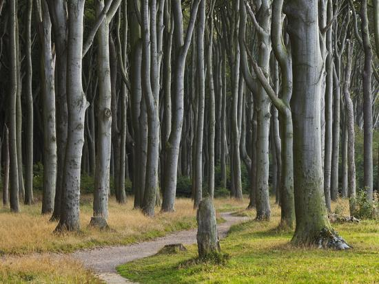 Way Through the Ghost's Wood, Nienhagen (Municipality), Mecklenburg-Western Pomerania, Germany-Rainer Mirau-Photographic Print