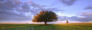 Treescape by Wayne Bradbury