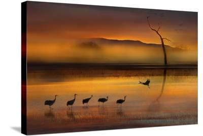 We Are Here Waiting For You-Shenshen Dou-Stretched Canvas Print