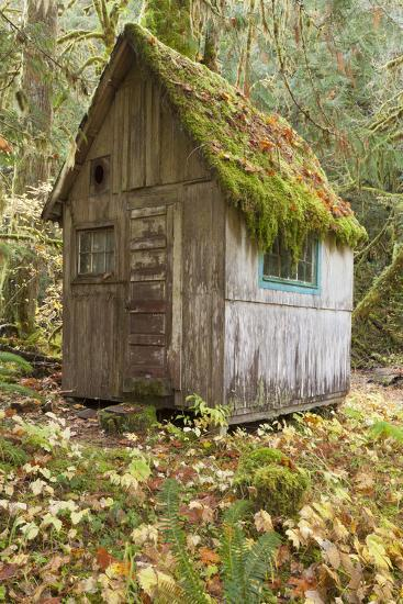 Weathered Old Cabin in Forest, Olympic National Park, Washington, USA-Jaynes Gallery-Photographic Print