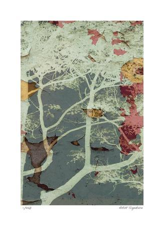 https://imgc.artprintimages.com/img/print/weathered-trees-in-blue-2_u-l-f5831d0.jpg?p=0