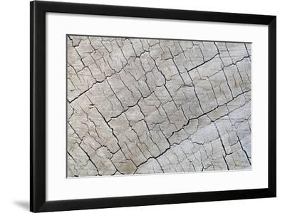 Weathered Wood I-Kathy Mahan-Framed Photographic Print