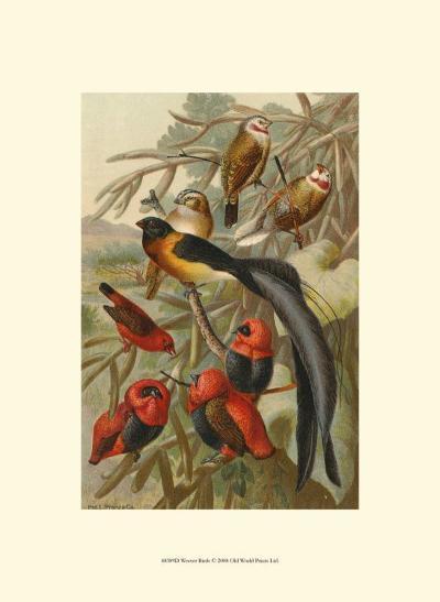 Weaver Birds--Art Print