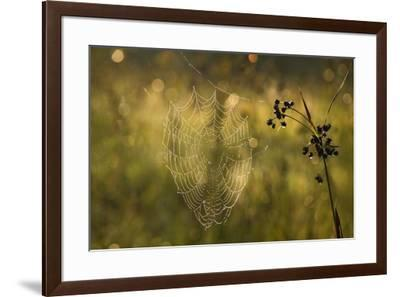 Web Of Dew-Michael Blanchette Photography-Framed Giclee Print