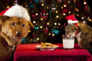 Cat And Dog Taking Over Santa'S Cookies And Milk by websubstance