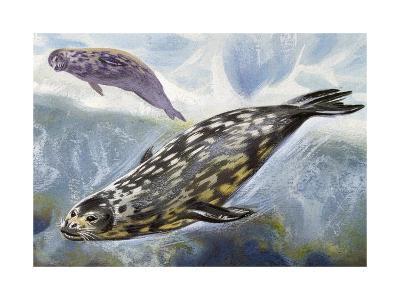 Weddell Seal (Leptonychotes Weddellii), Phocidae--Giclee Print