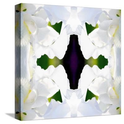 Wedding Iris-Rose Anne Colavito-Stretched Canvas Print