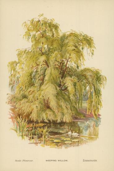 Weeping Willow-William Henry James Boot-Giclee Print