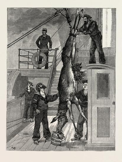 Weighing the Prince's Elk on Board the Osborne, Sweden--Giclee Print