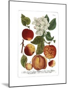 Weinmann Fruits I by Weimann