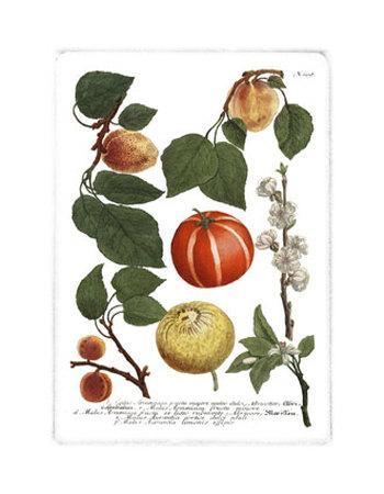 Weinmann Fruits IV