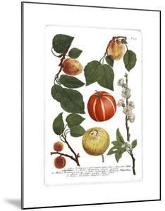 Weinmann Fruits IV by Weimann
