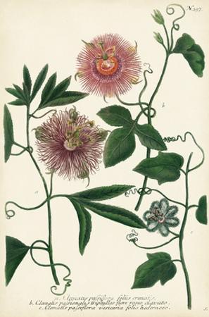 Antique Passion Flower I