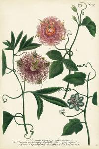 Antique Passion Flower I by Weinmann