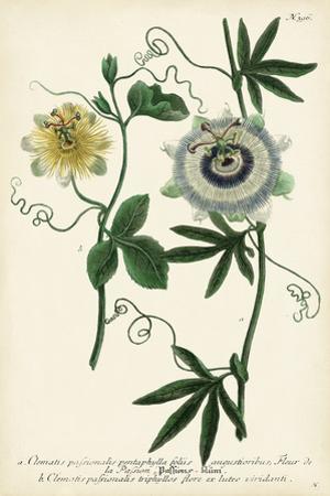Antique Passion Flower II