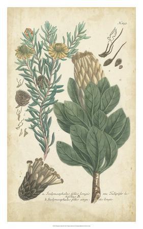https://imgc.artprintimages.com/img/print/weinmann-conifers-iii_u-l-f8057j0.jpg?p=0