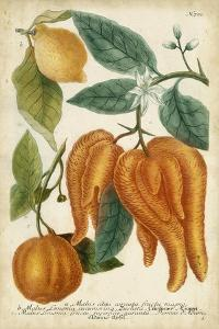 Exotic Citrus I by Weinmann
