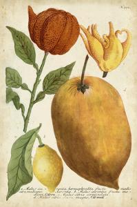 Exotic Citrus II by Weinmann