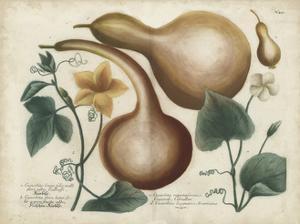 Exotic Weinmann Botanical I by Weinmann
