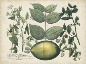 Exotic Weinmann Botanical II by Weinmann
