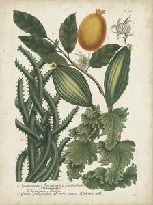 Exotic Weinmann Botanical III by Weinmann