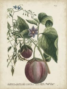 Exotic Weinmann Botanical IV by Weinmann