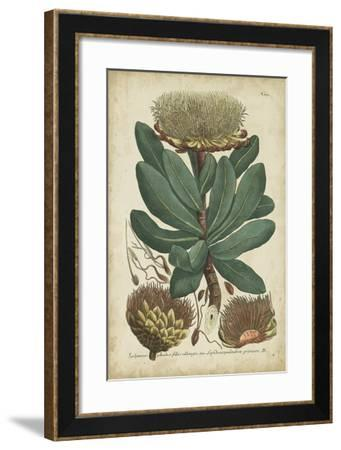 Weinmann Foliage & Fruit I-Weinmann-Framed Giclee Print