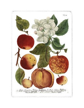 https://imgc.artprintimages.com/img/print/weinmann-fruits-i_u-l-etfs10.jpg?p=0
