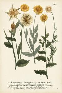 Saffron Garden III by Weinmann