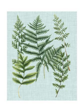 Spa Ferns I