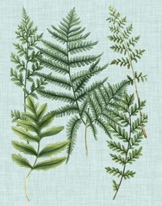 Spa Ferns I by Weinmann