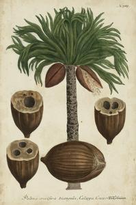 Vintage Tropicals I by Weinmann