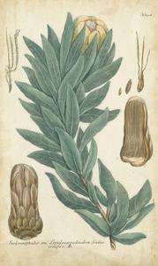 Weinmann Conifers I by Weinmann