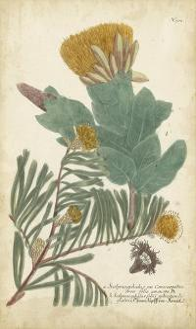 Weinmann Conifers II by Weinmann