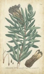Weinmann Conifers IV by Weinmann