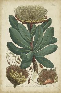 Weinmann Foliage and Fruit I by Weinmann