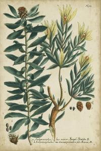 Weinmann Foliage and Fruit IV by Weinmann