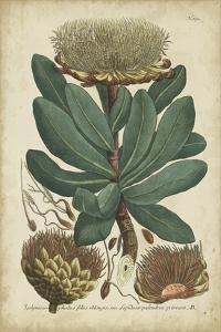 Weinmann Foliage & Fruit I by Weinmann