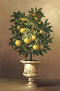 Potted Orange Tree by Welby