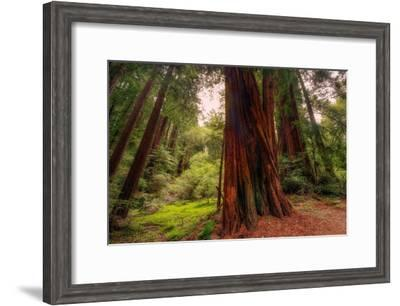 Welcome to Muir Woods 4-Vincent James-Framed Photographic Print