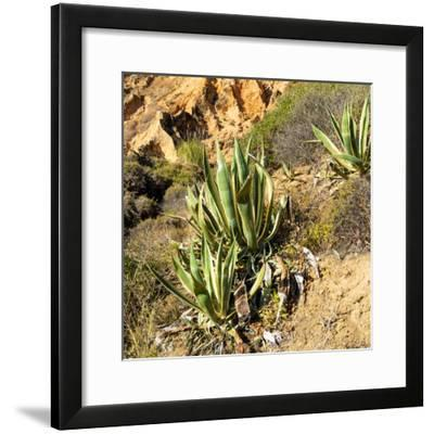 Welcome to Portugal Square Collection - Wild Agaves-Philippe Hugonnard-Framed Photographic Print