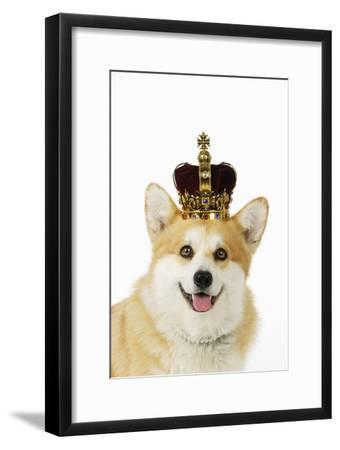 Welsh Corgi Dog Wearing Crown and Pearls