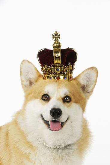 Welsh Corgi Dog Wearing Crown and Pearls--Photographic Print