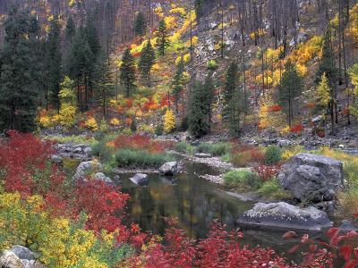 Wenatchee River and Fall Color, Tumwater Canyon, Washington, USA-Jamie & Judy Wild-Photographic Print